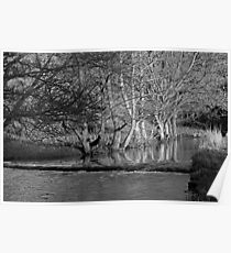 Riverside Trees, Wolfscote Dale Poster