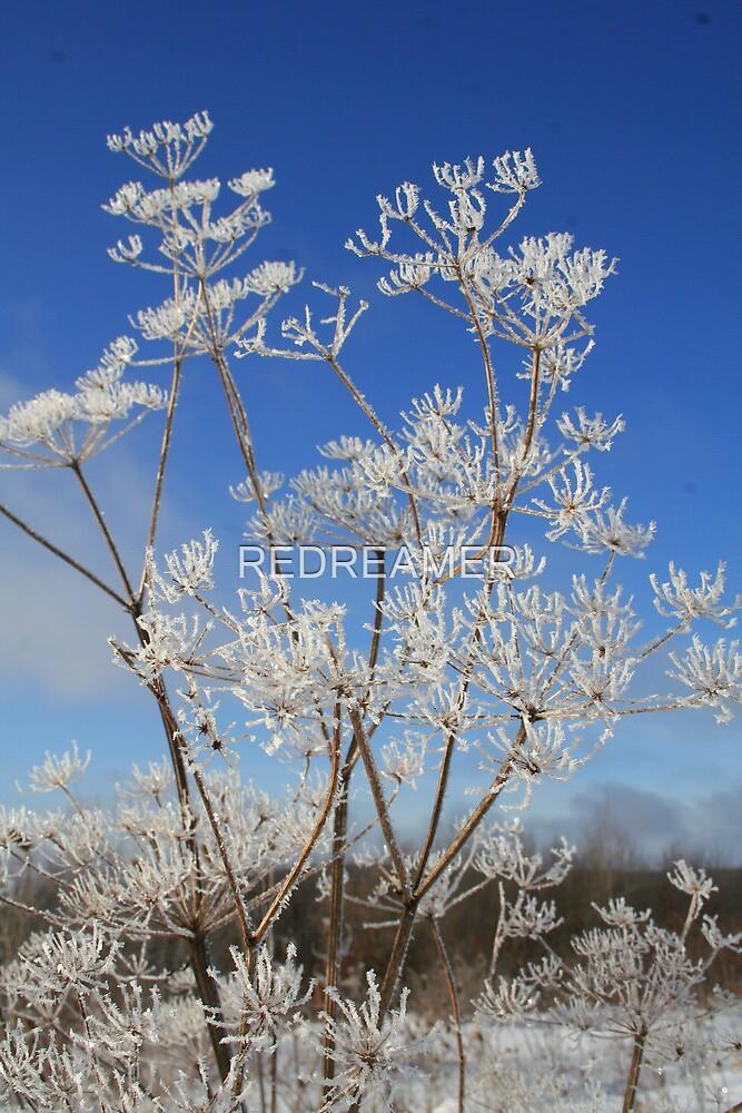 REDREAMING WHITE ICE FLOWER by REDREAMER
