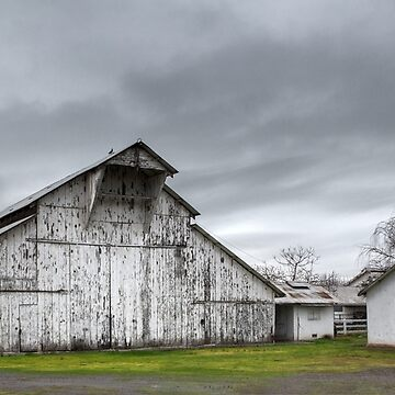 Country Barn by Osso