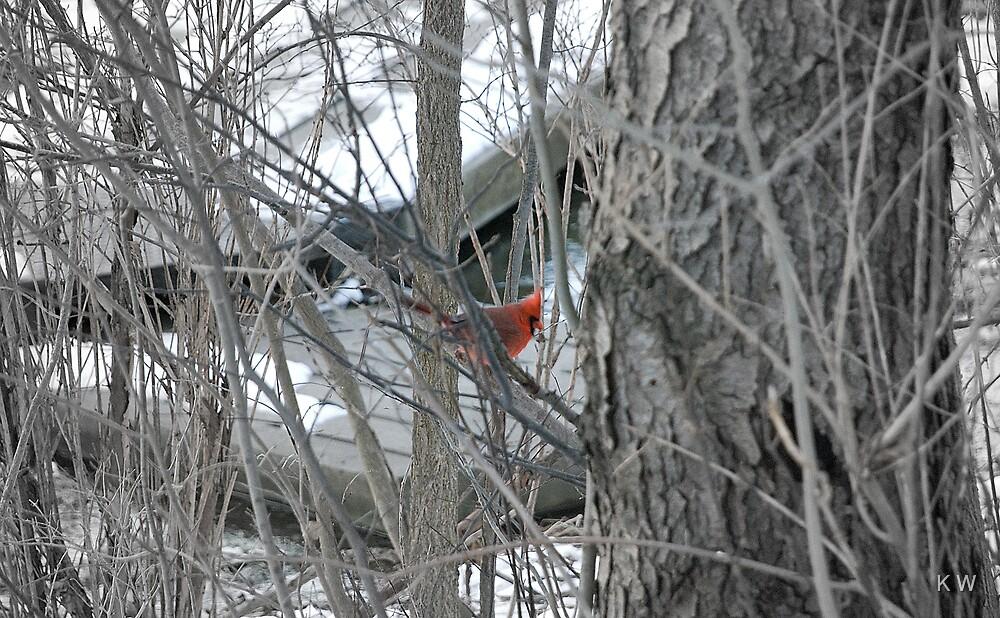 Red Cardinal by K W