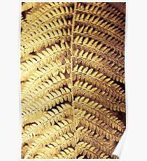 Derrynane Gardens - 'Gold Leaf' Poster