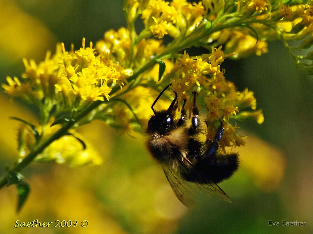 Busy as a Bee by Eva Saether