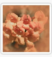 Softly Peach Sticker