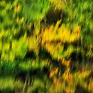 Abstract autumn colours reflected in the river by Patrick Morand