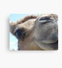 Camel Kiss Canvas Print