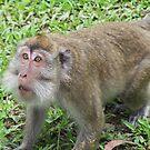 Monkey by Joeltee