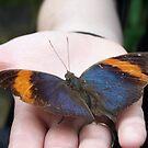 Butterfly on Hand by Joeltee