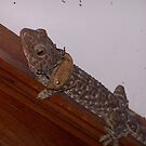 Gecko with passenger by Joeltee