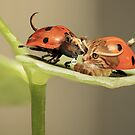 Lady Buggin by Randy Turnbow