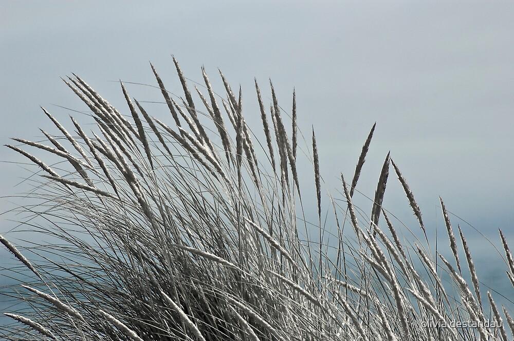 Silver Weeds by olivia destandau