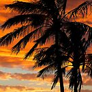 Tropical Silhouette by John Wallace