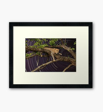 Leopard in tree with startrail Framed Print