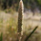 The Lone Grass by Sprinkla