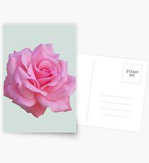 Pink rose Postcards