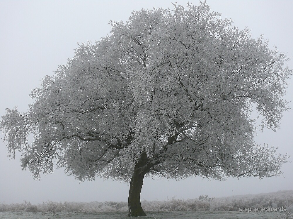 iced tree by stephenedwards