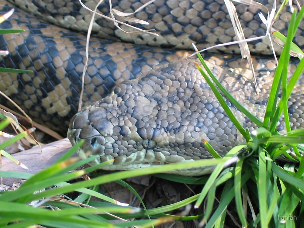snake in the grass by Taniah