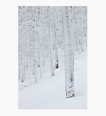 Snow covered forest winter wonderland Photographic Print