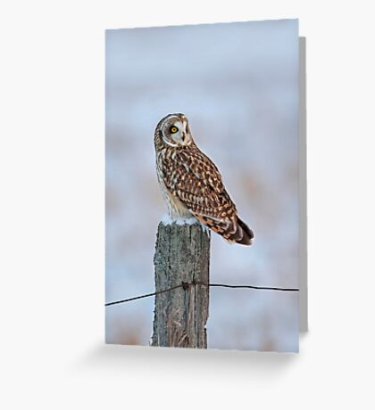 Short-eared owl in winter Greeting Card