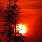 Two Pine Sunset by lorilee