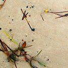 Beachcombing 1 by kimomalley