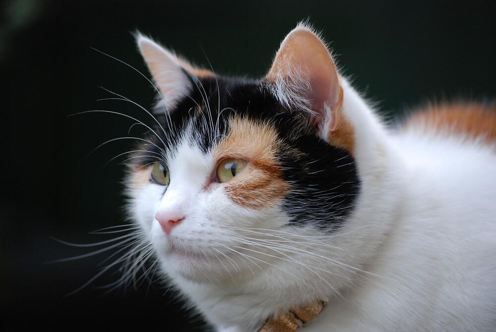 Cat Katie by Paul Loveday