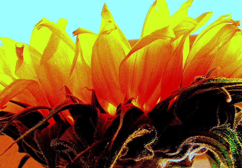 sun blessed flower by linsads