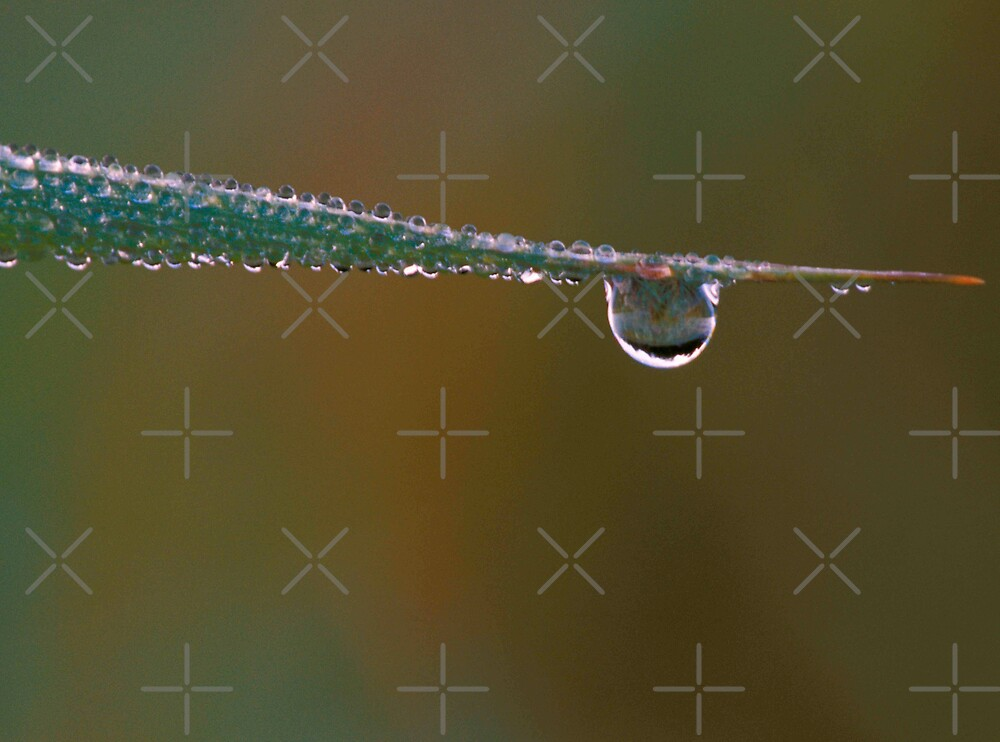 Just a Water Droplet by Bill Spengler