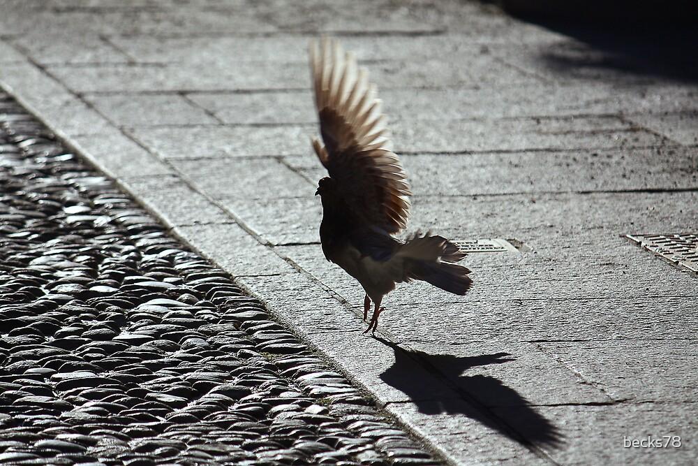 Pigeon take off flight by becks78