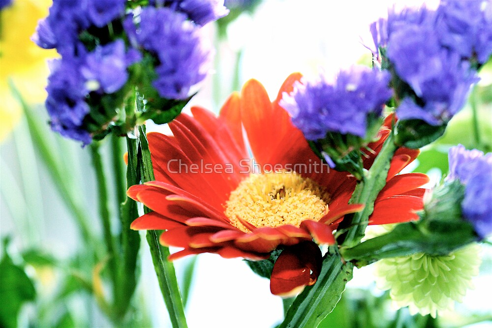 colours by Chelsea Shoesmith