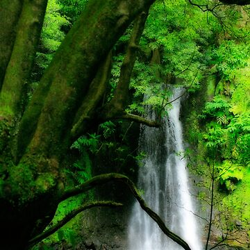 Waterfall, Azores islands by gavila