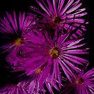 Fireworks by Shadowdreamer