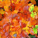 Fall colours by Eugenio