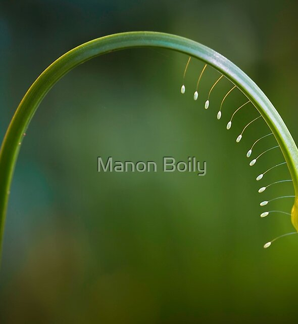 Tiny bulbs by Manon Boily