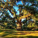 A Great Oak of Brookgreen by TJ Baccari Photography