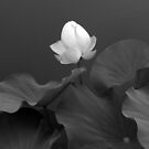 Phantom Floral by Jessica Jenney