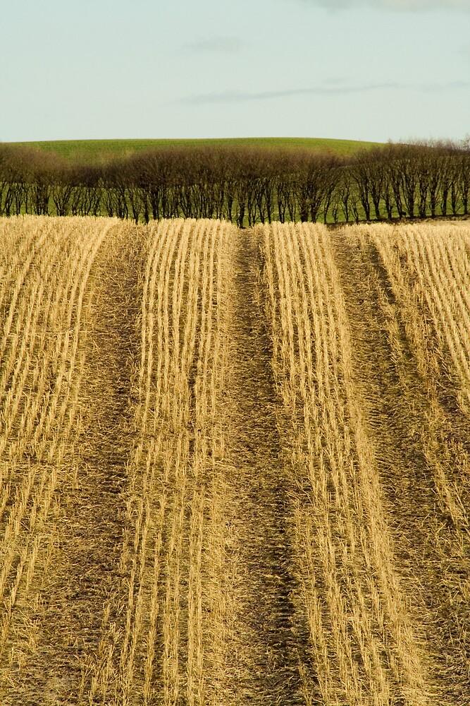 Striped fields by Lars Clausen