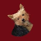 "Cute Yorkie - ""Irish"" Yorkshire by AOertel"