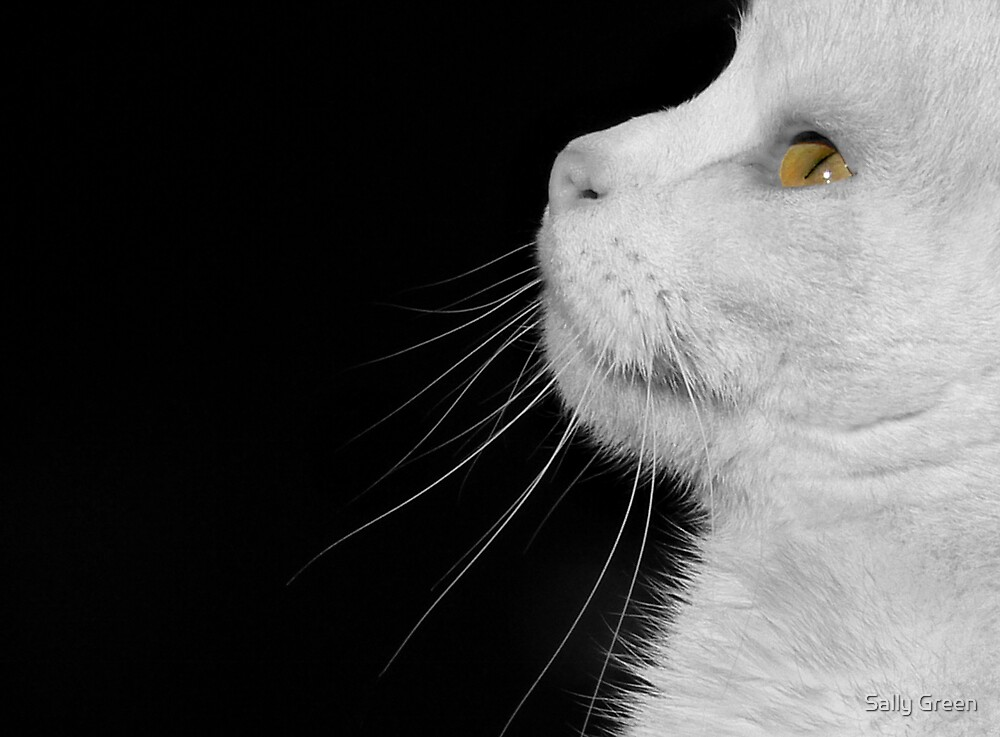 Casper In Profile by Sally Green