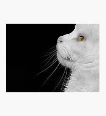 Casper In Profile Photographic Print