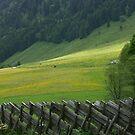 Spring in the Austrian Alps. 2005 . Dr.Andrzej Goszcz. No.2.. #DrAndrzejGoszczPhotography by © Andrzej Goszcz,M.D. Ph.D