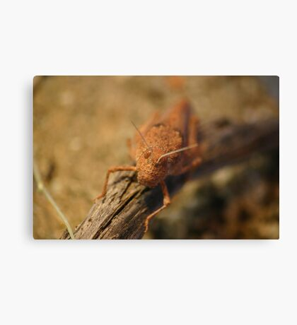 Desert Grasshopper Canvas Print