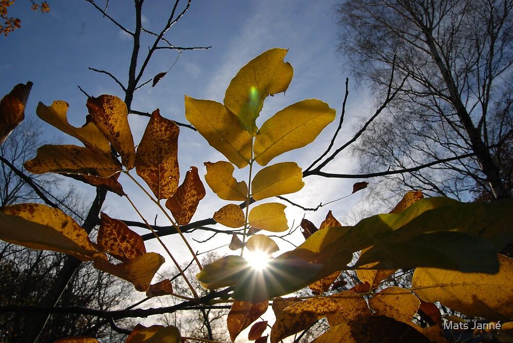 Sun Come Shining Through by Mats Janné