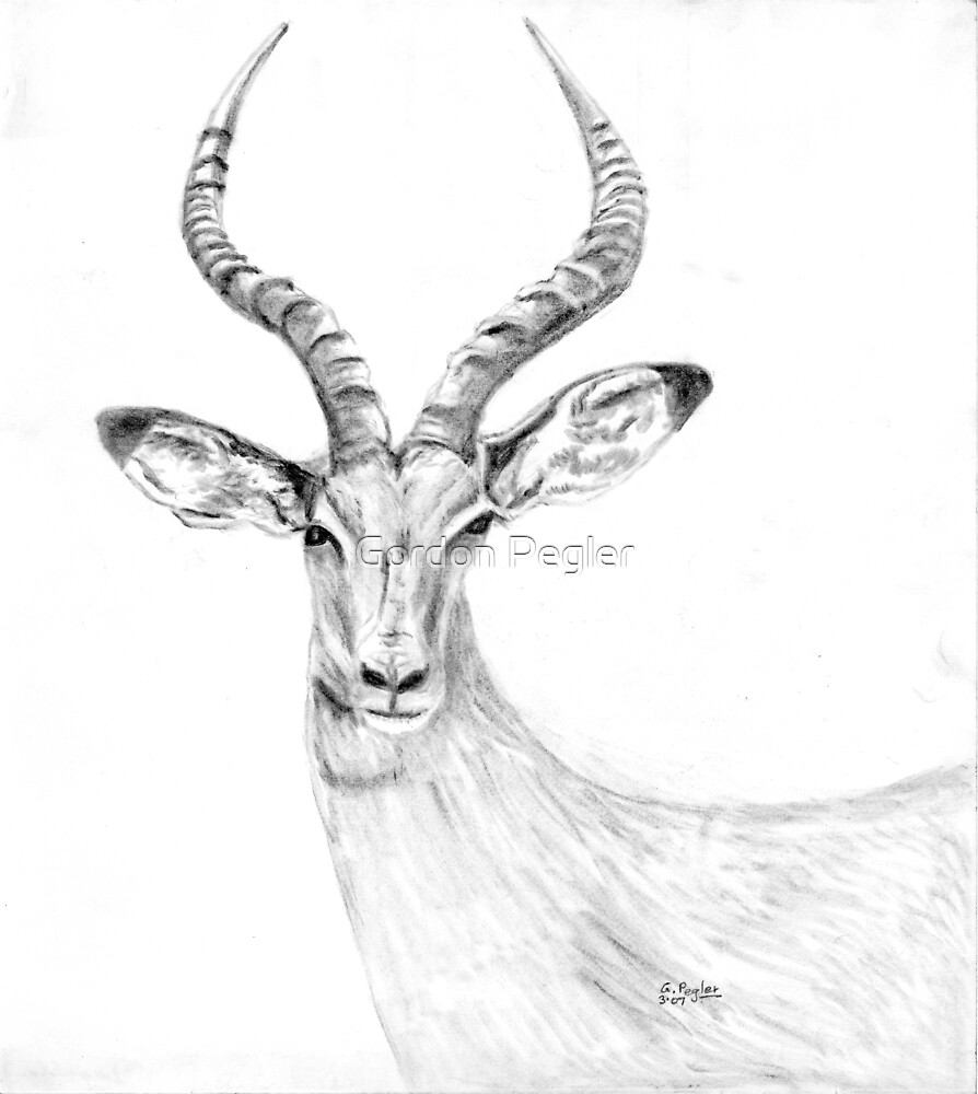 Impala -charcoal by Gordon Pegler