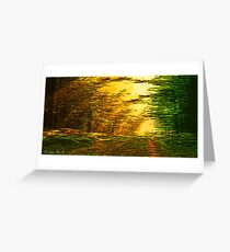 Picture 2015063 Justin Beck sunset in the Forest Greeting Card