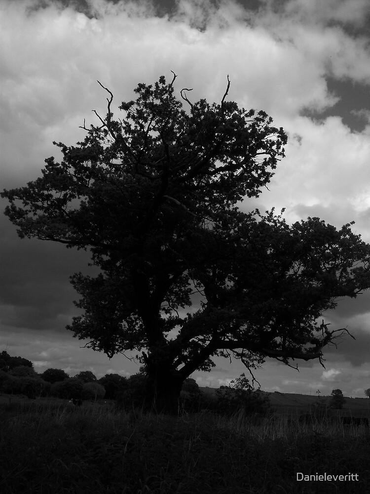 Old tree by Danieleveritt