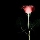 flower by dubai