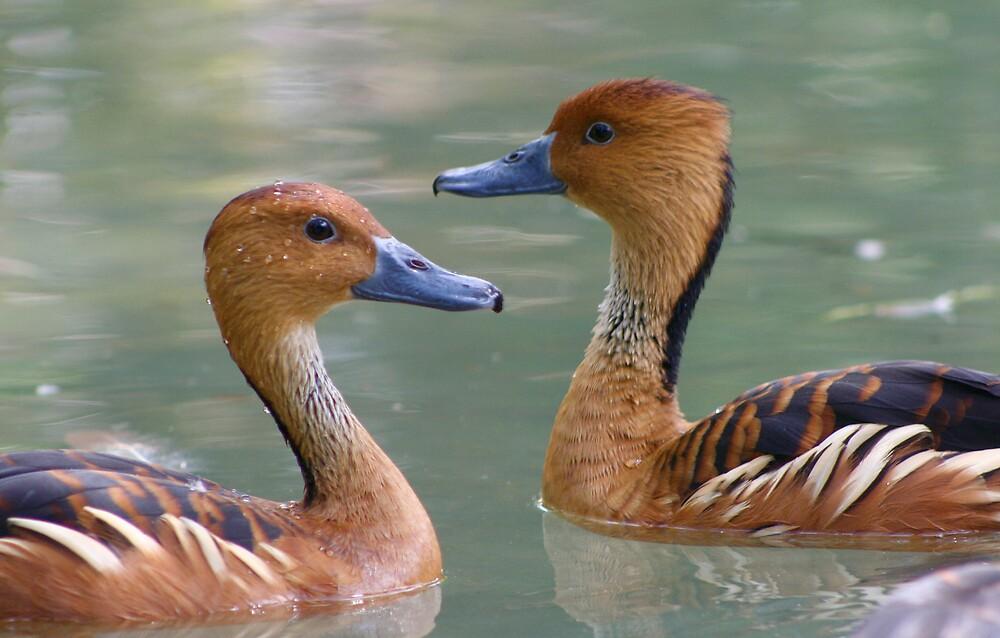 ducks by Sol Whiteley