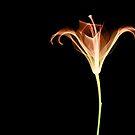 flower dubai2 by dubai