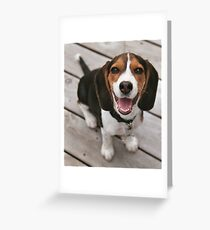 beagle puppy sitting Greeting Card