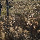 Wisconsin prairie in late fall by distracted